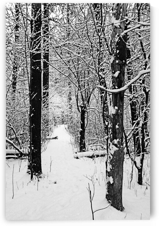 Decked In Snow Black And White by Deb Oppermann