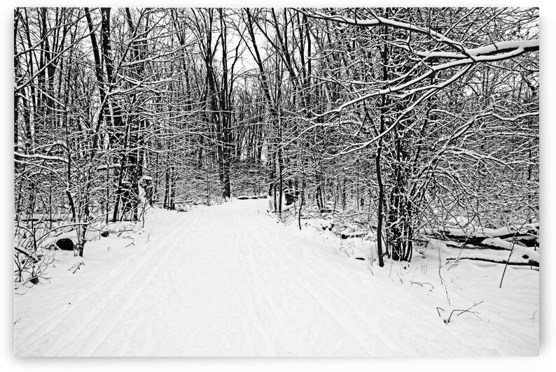 Walking A Winter Trail I Black And White by Deb Oppermann