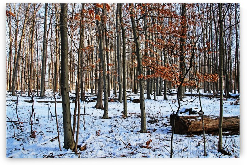 Fall And Winter Forest by Deb Oppermann