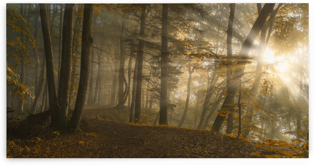 Forest Light by 1x
