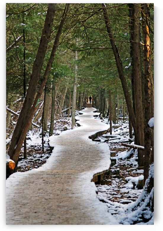 Meandering Winter Boardwalk by Deb Oppermann