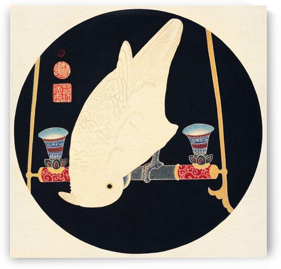 A White Macaw by Tony Tudor
