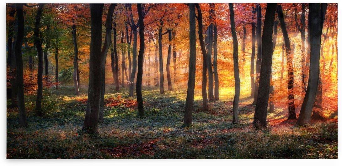Autumn Woodland Sunrise by 1x