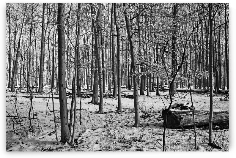 Fall And Winter Forest Black And White by Deb Oppermann