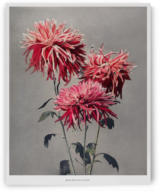 hand   colored collotype from Some Japanese Flowers by Tony Tudor