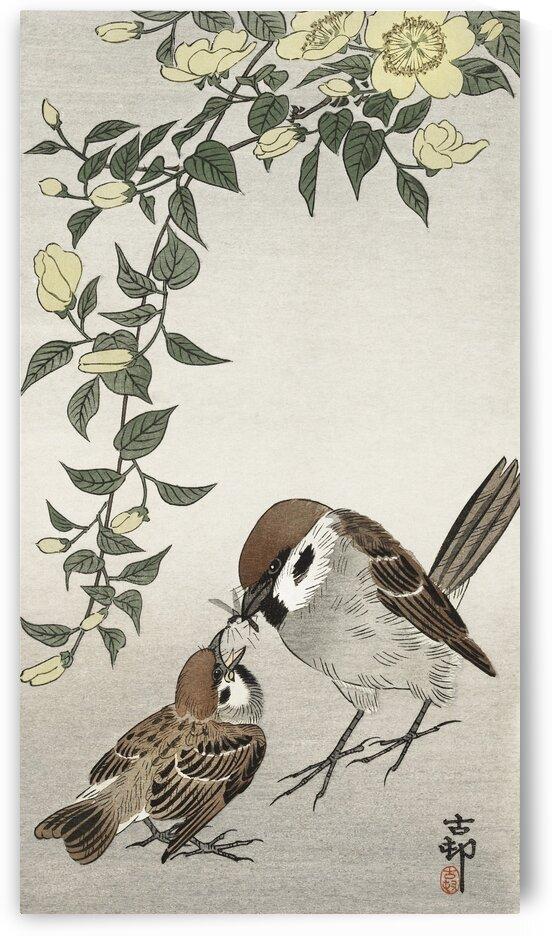 Birds and plants 2 by Tony Tudor