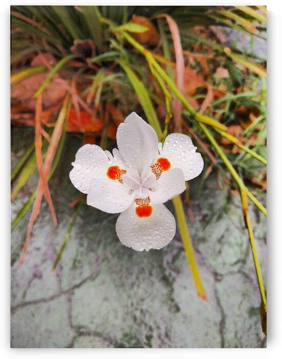 Flower covered with raindrops in the middle of the city. by Mama Gipsy