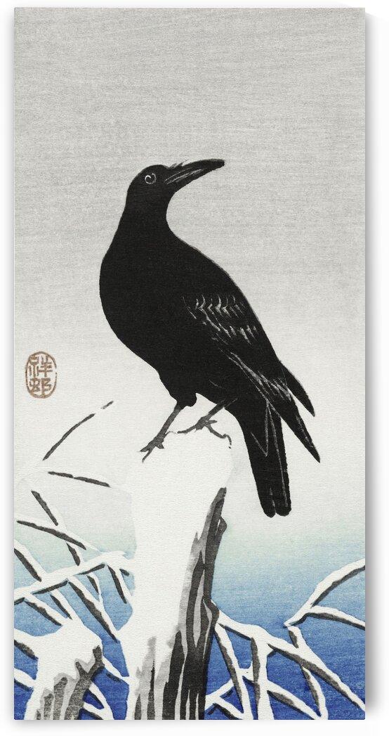 Crow on snowy pole by Tony Tudor