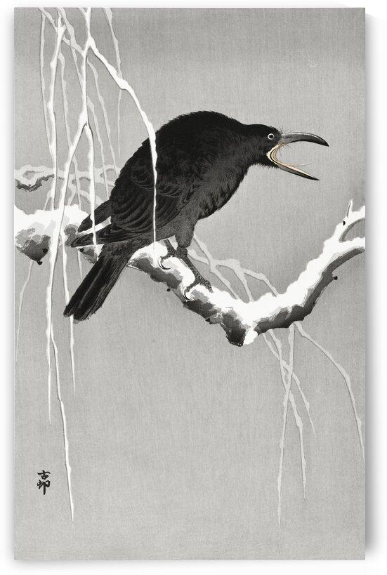 Crow on snowy branch 3 by Tony Tudor