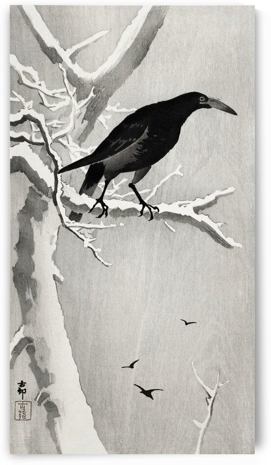 Crow on snowy tree branch by Tony Tudor
