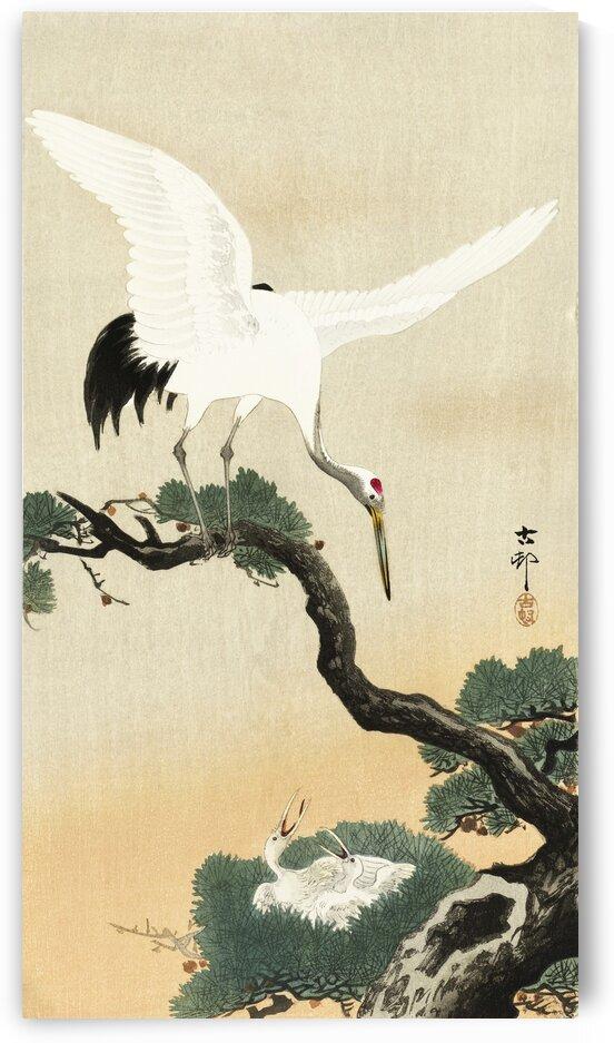 Japanese crane bird on branch of pine by Tony Tudor