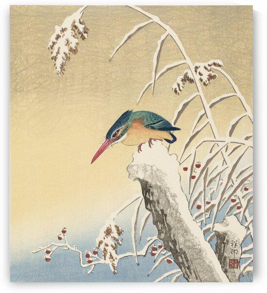 Kingfisher in the snow by Tony Tudor