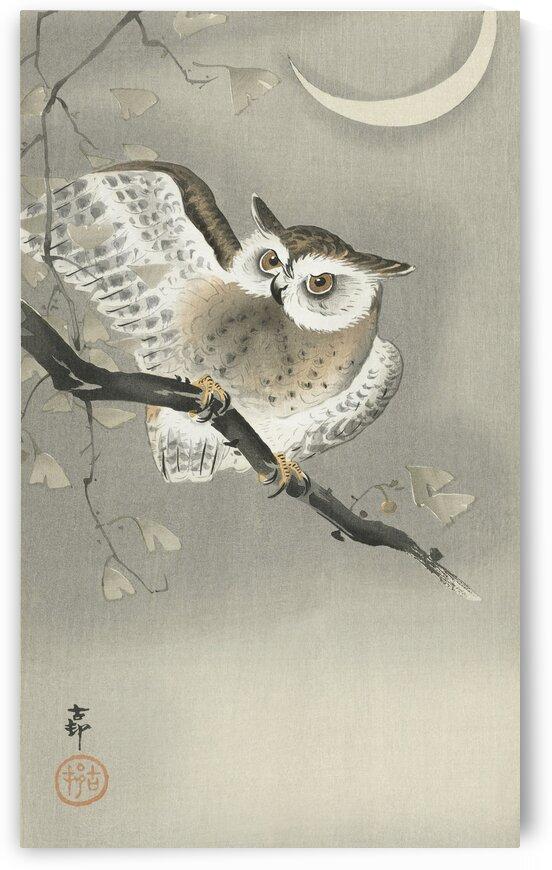 Long eared owl in ginkgo by Tony Tudor