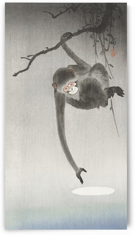Monkey and reflection of the moon by Tony Tudor