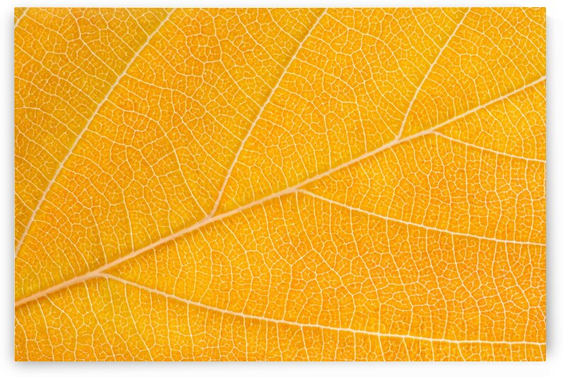 Autumn Leaf by Philippe Monthoux
