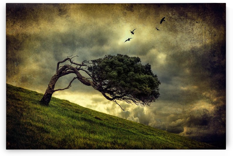 Winds of Change by Peter Elgar  by 1x