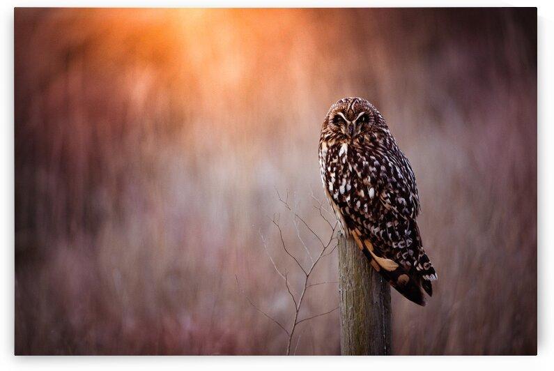 OWL by Wesley Allen Shaw