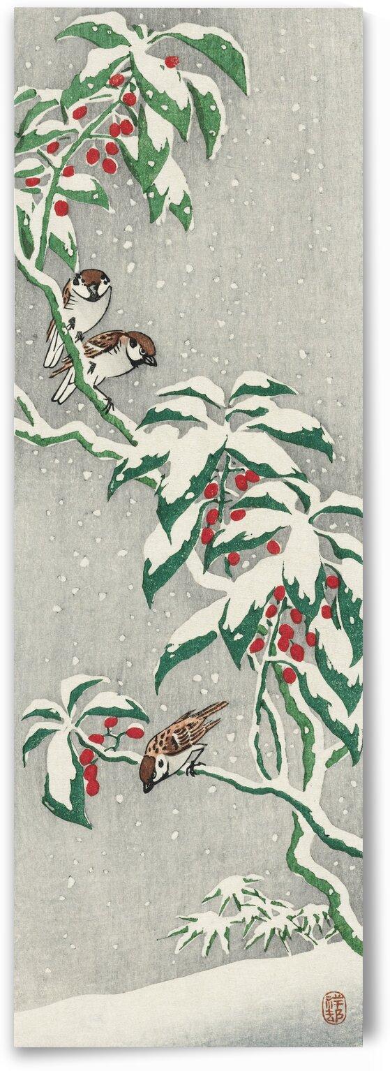 Sparrows on snowy berry bush by Tony Tudor