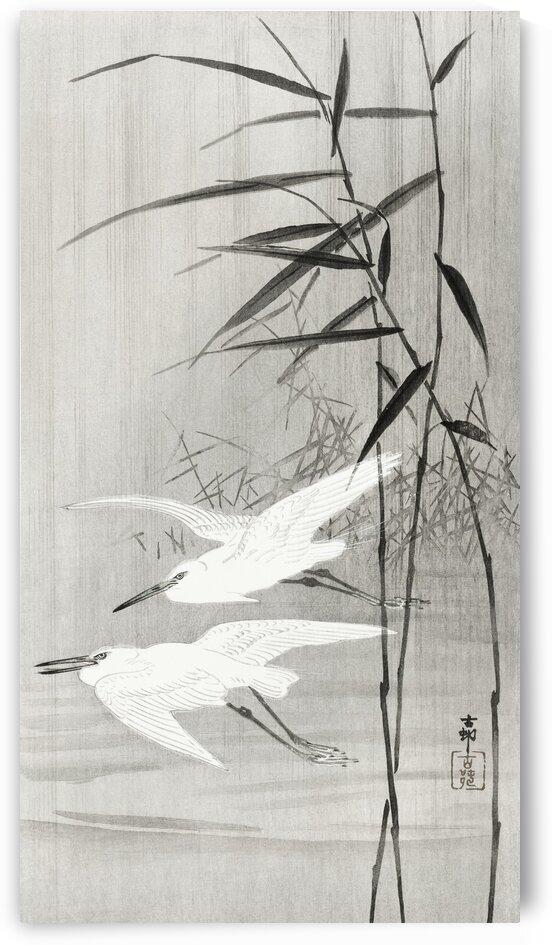 Two egrets in flight by Tony Tudor