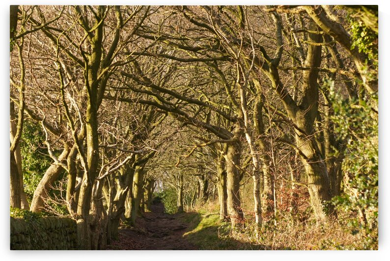 Tree covered path by Andy Jamieson