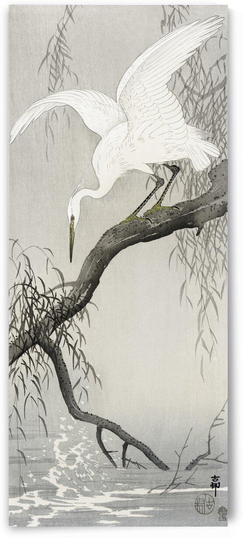 White heron on tree branch by Tony Tudor
