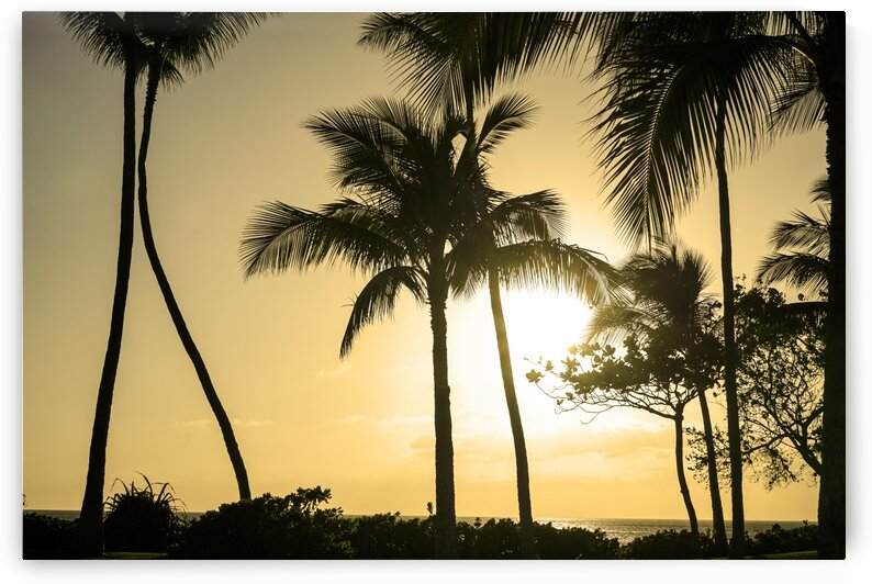 Through the Palms by 24