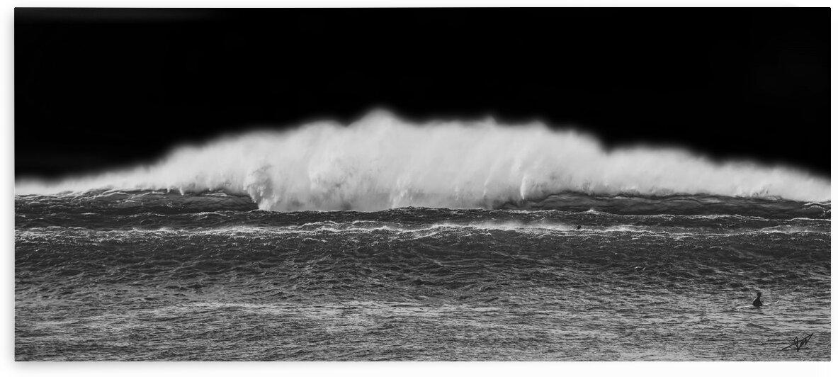 Outer Reef BW Blackback by John Myers