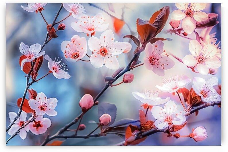 Sakura by Manjik Pictures