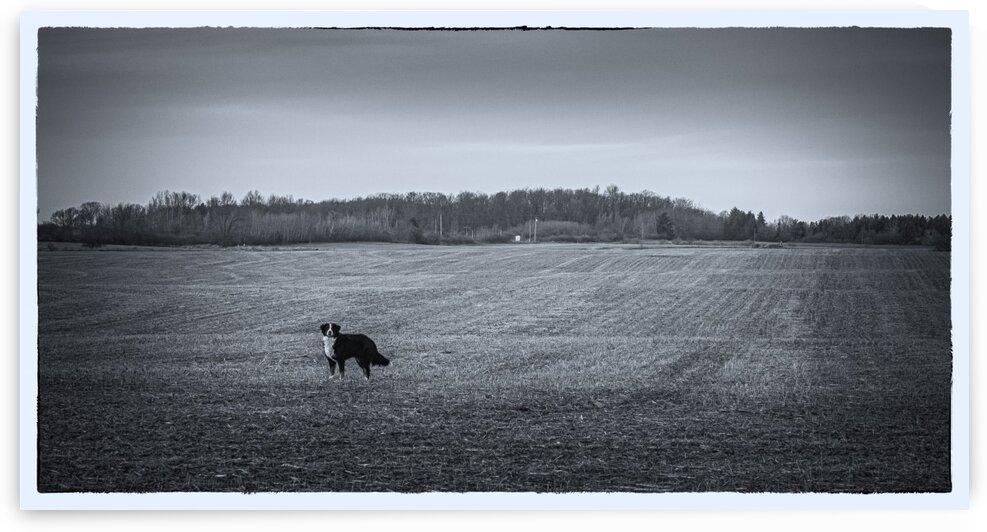 Dog In Field by everydayrae - Walter Raemisch