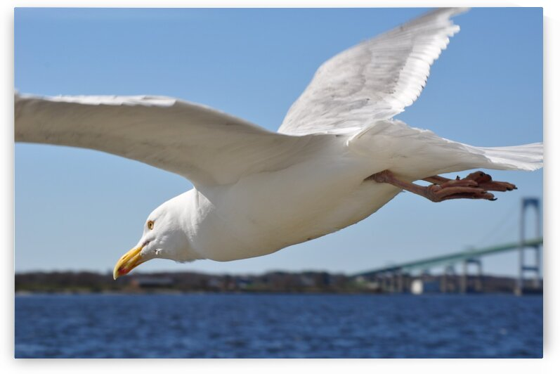 Seagull over Newport by Magic Forest
