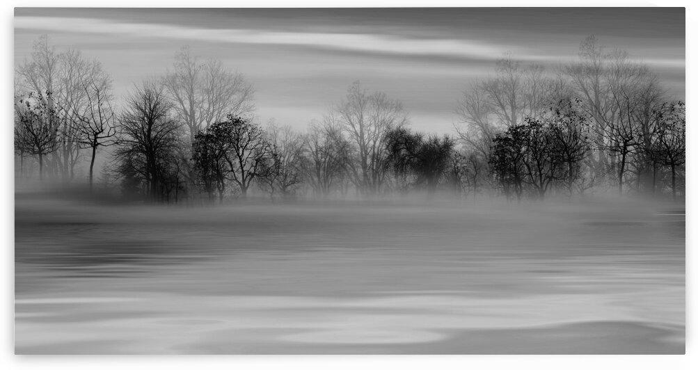 Foggy day in the meadow. by Ievgeniia Bidiuk