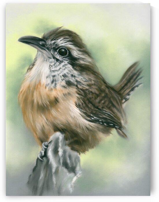 Carolina Wren Perky Little Bird Portrait by MM Anderson