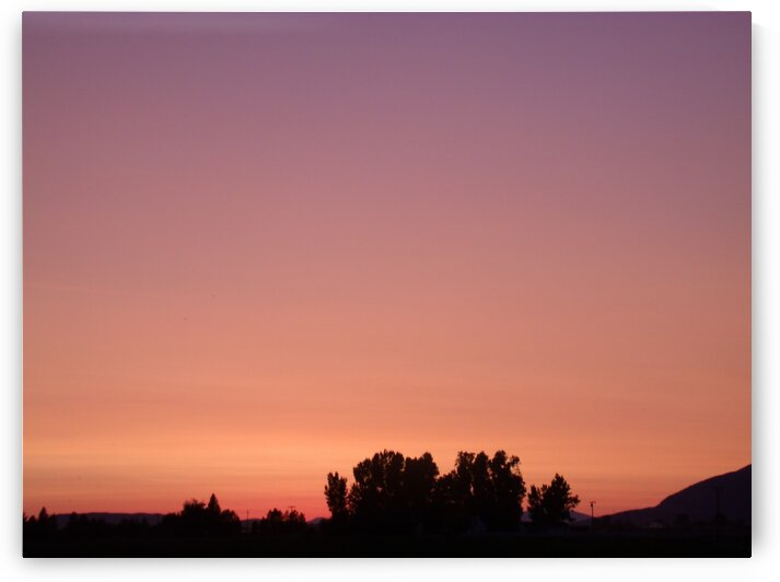 Sunset Over Trees 2 by Sherrie Larch