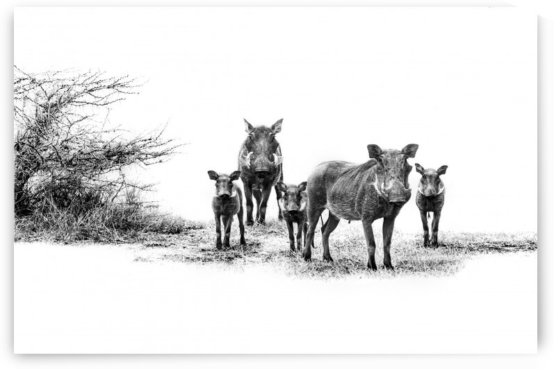 Warthog Family Portrait by Vision Quest Photography
