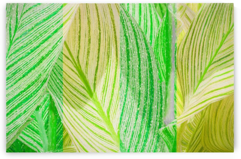 Dark and Light Green Leaves by Edgar Serrano