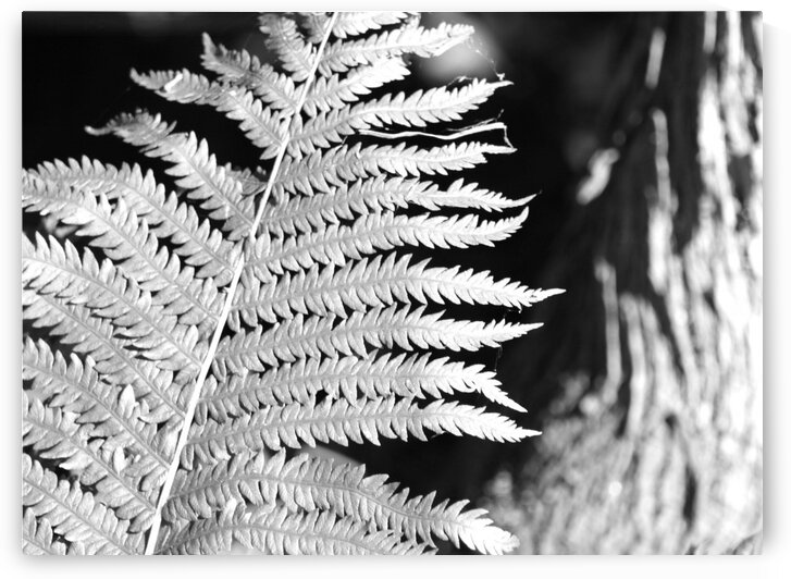Ferns in morning sun by Lynn Prudhomme Mills