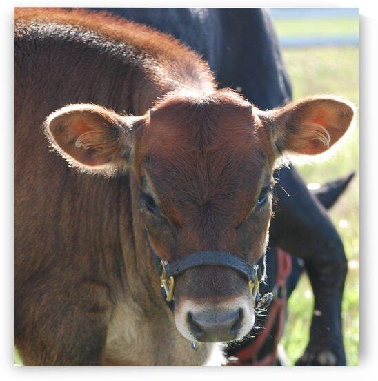 Calf by Lynn Prudhomme Mills