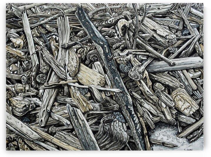Beach Driftwood by Stephen Emms