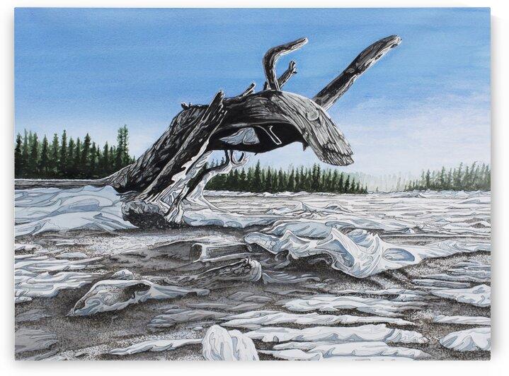 Winter Dragon by Stephen Emms