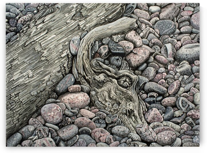 Pebble Beach Driftwood by Stephen Emms