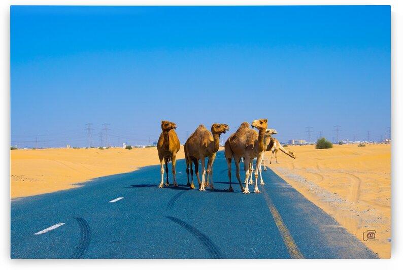 Camel herd by Vasuki Arts