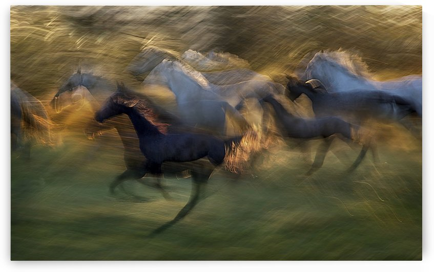 fiery gallop by milan malovrh  by 1x