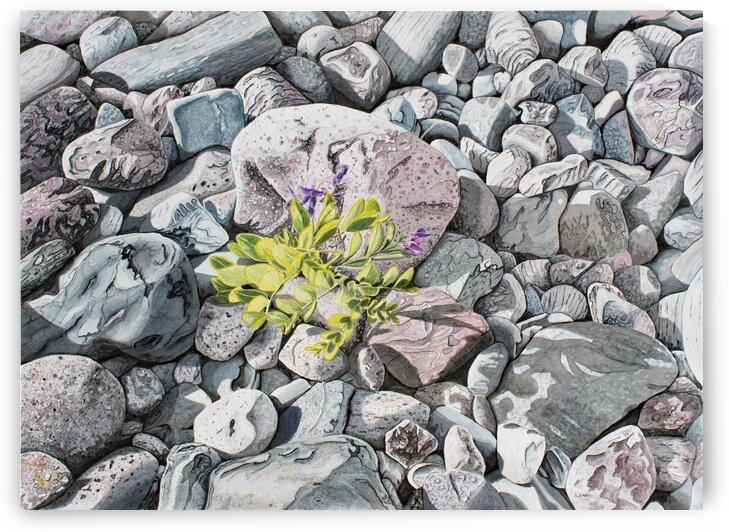 Beach Peas  by Stephen Emms