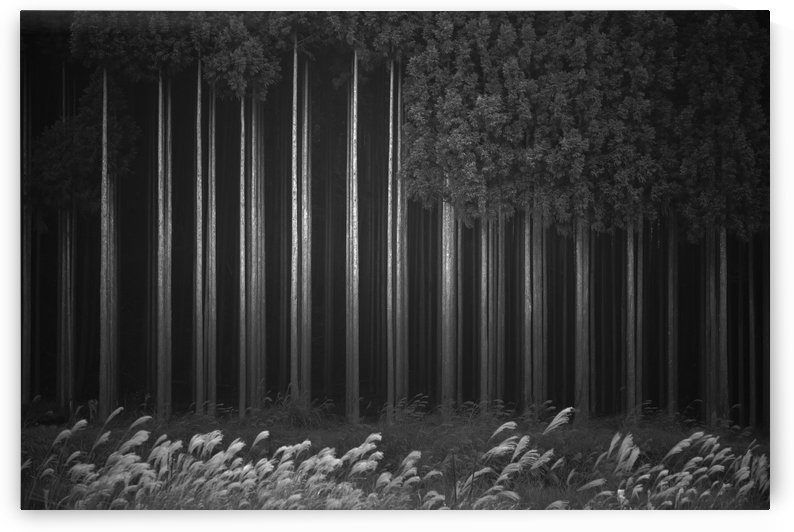 Afforestation by 1x