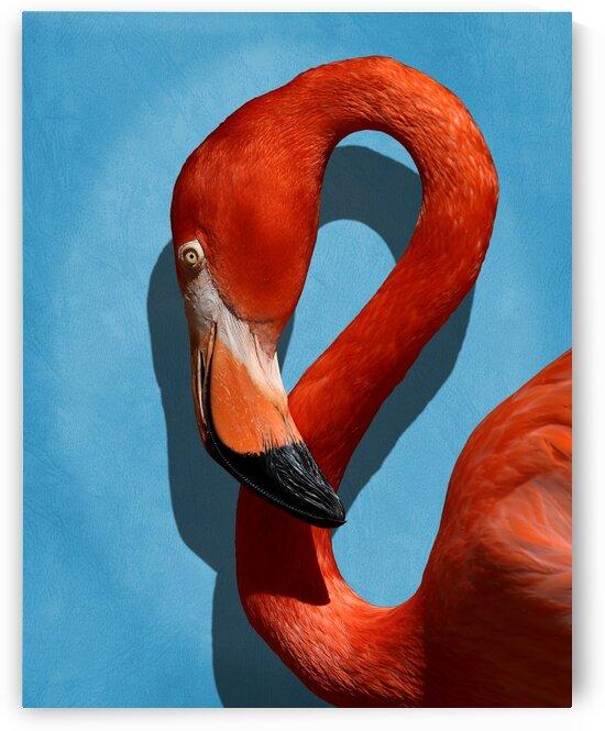 Caribbean Flamingo Profile Portrait 8x10 by Studio Dalio