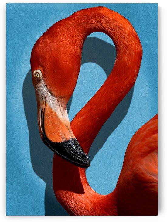 Caribbean Flamingo Profile Portrait 5x7 by Studio Dalio