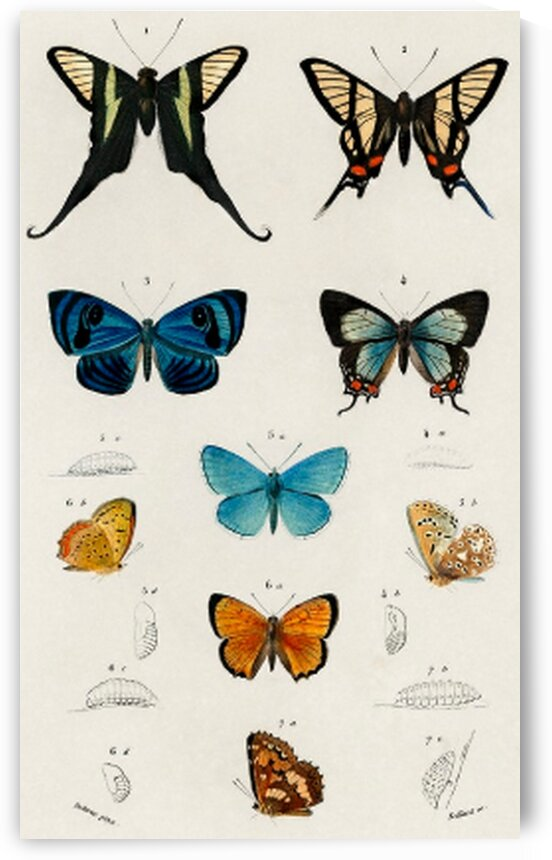 Collection of hand drawings of butterflies illustrated by Mutlu Topuz