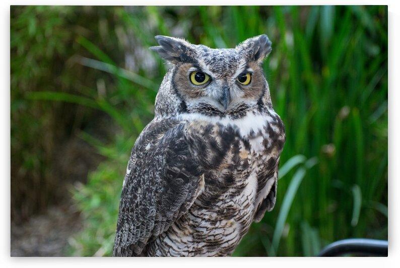 Owl  6 by Jodi Webber