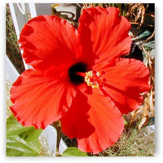 Flower43 by Jodi Webber