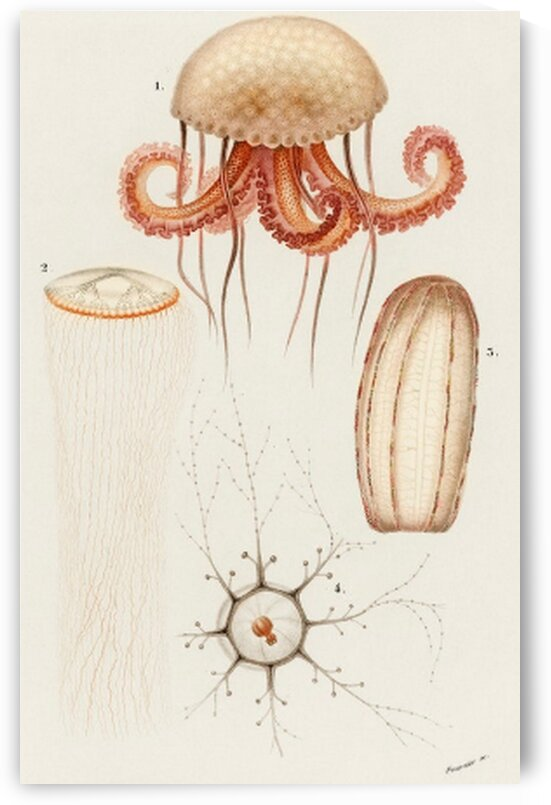 Different types of marine life illustrated by Mutlu Topuz